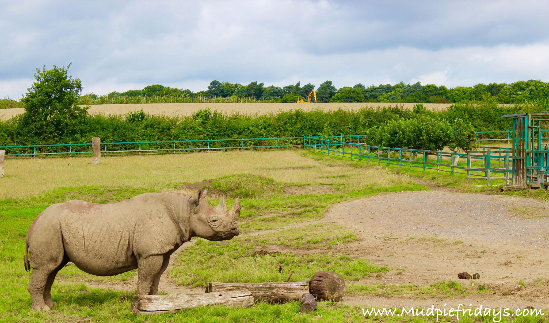 Howletts Rhino
