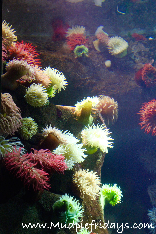 Ripleys Aquarium of Canada