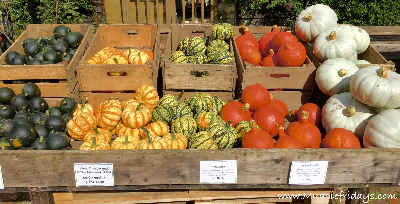 Pumpkins at Castle Farm