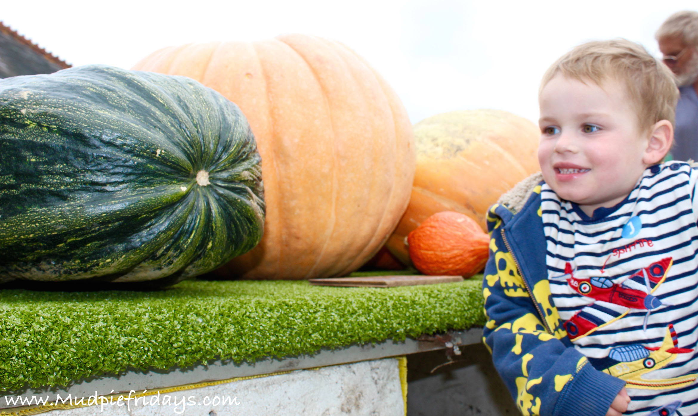 Slindon Pumpkins Oct 2015