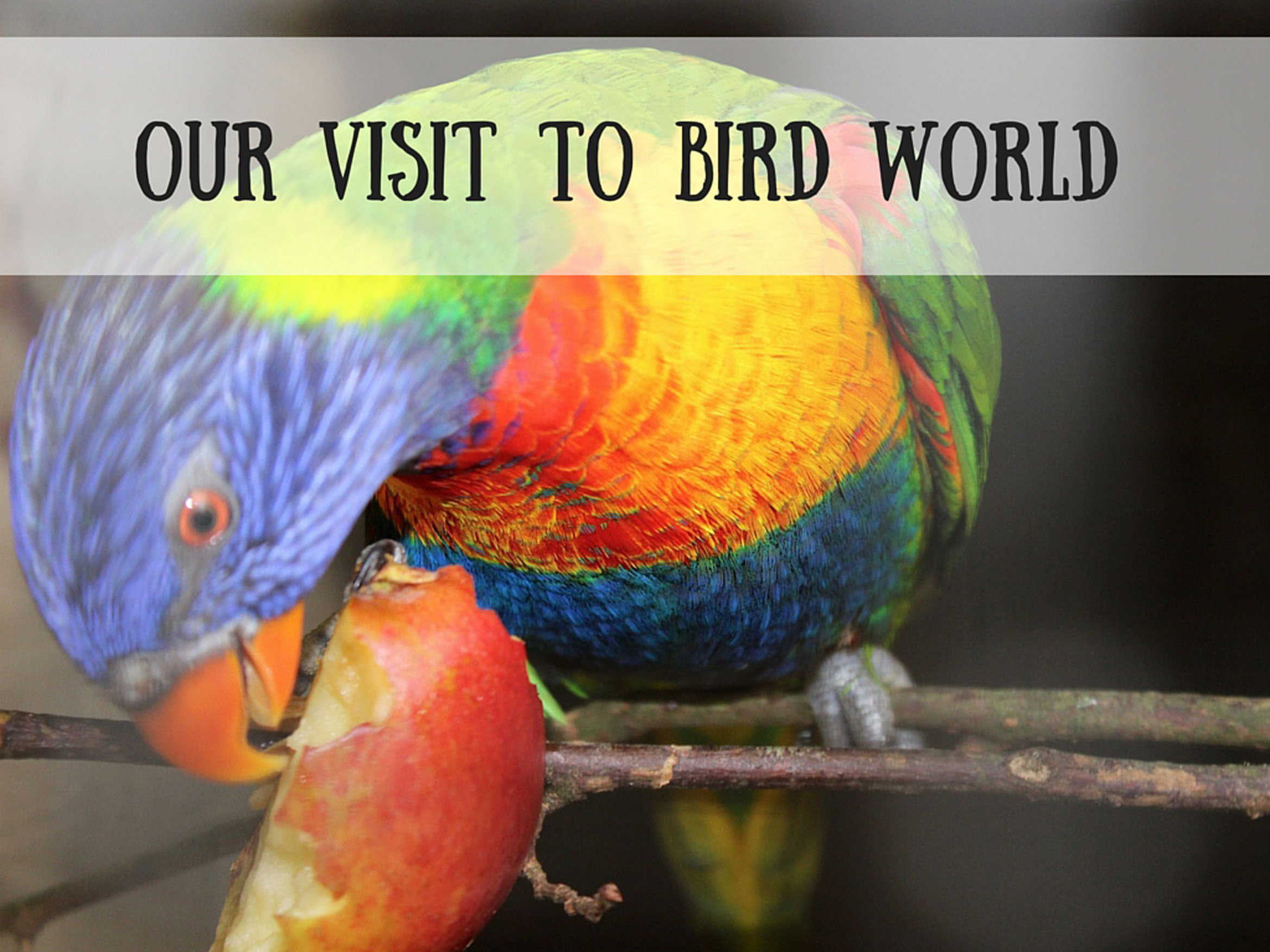 Our Visit to Bird World