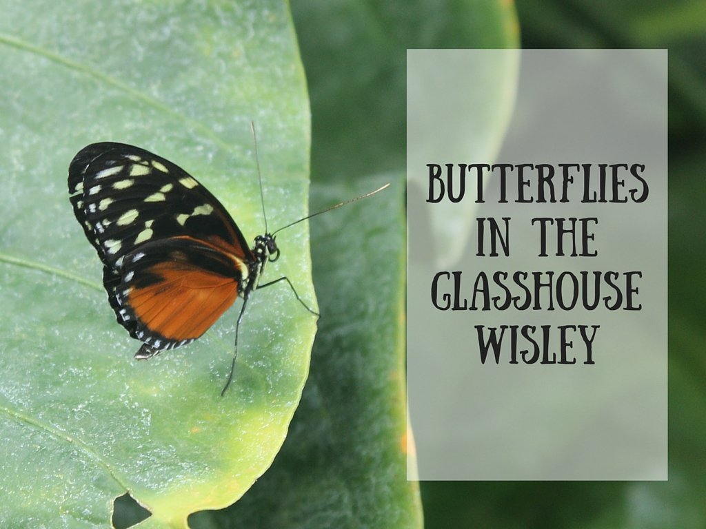 Butterfliesin theGlasshouseWisley