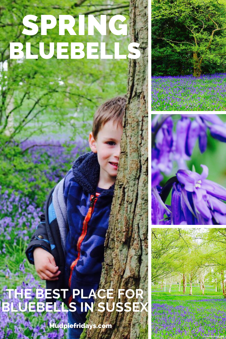 The Best Place for Bluebells in Sussex