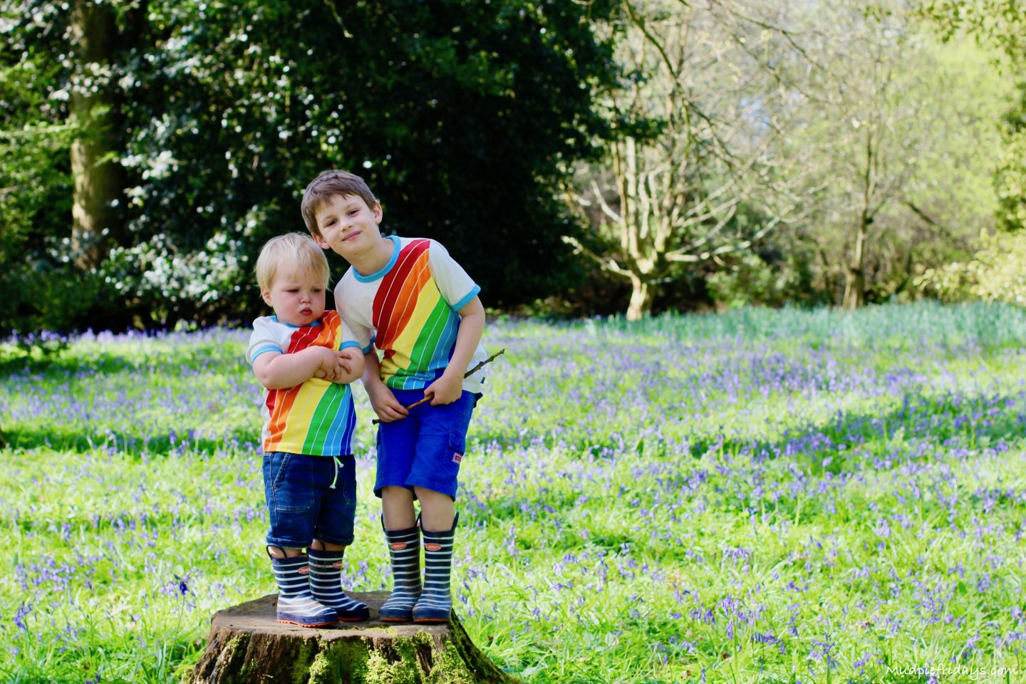 The Best Place in Surrey for Bluebells