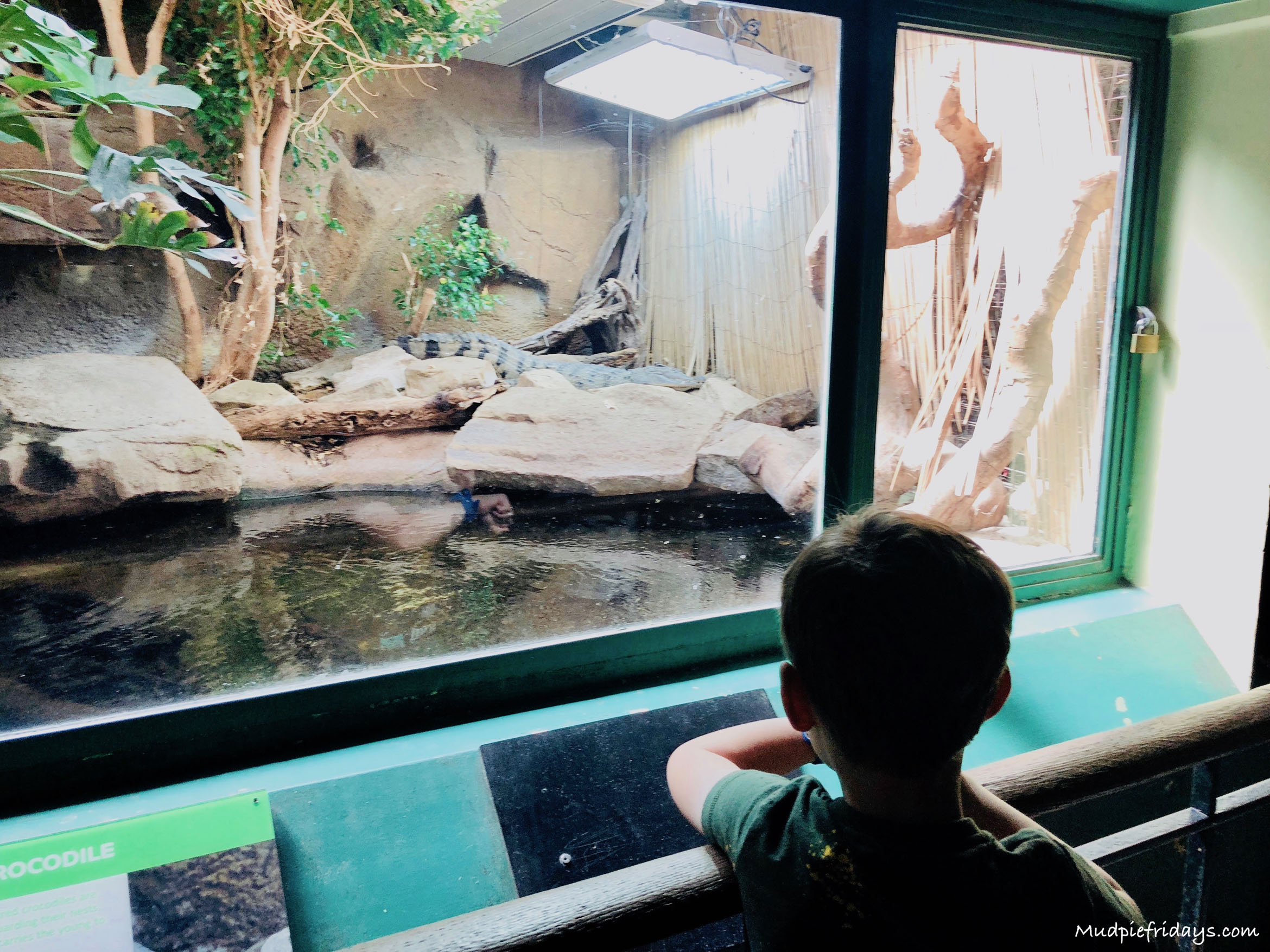 Family Fun at ZSL London Zoo - mudpiefridays com