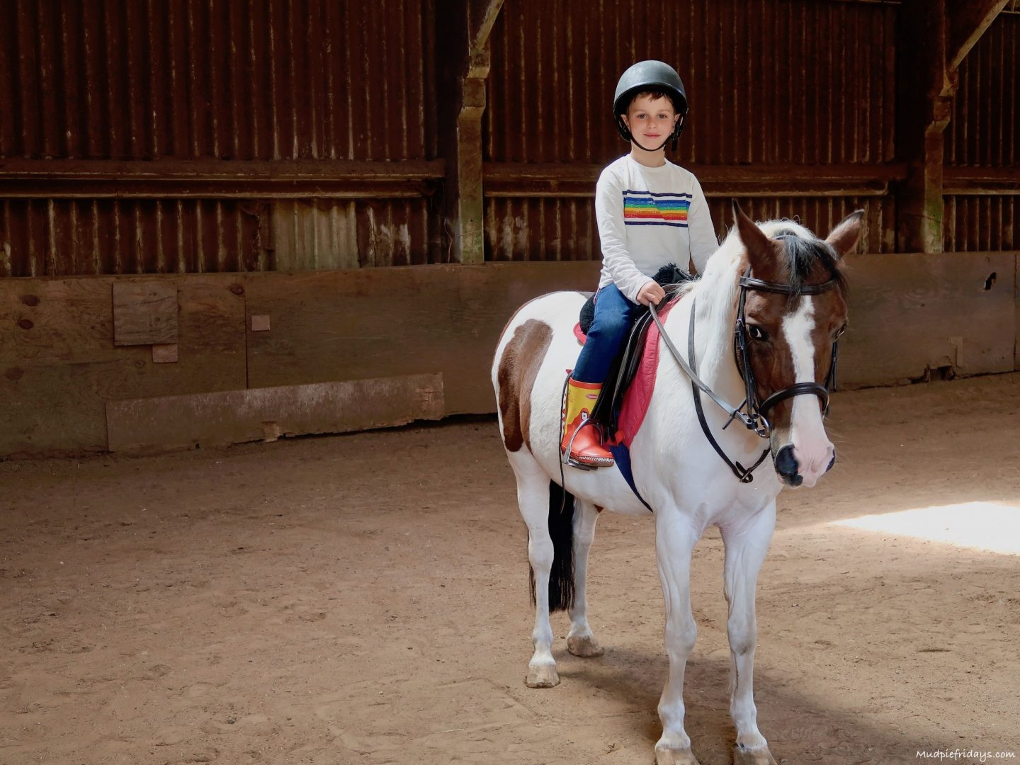 Monkey's first horse riding lesson