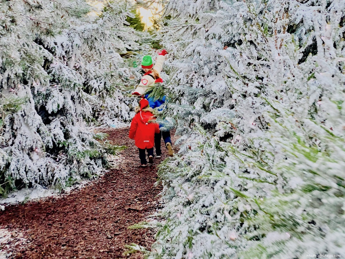 kids running through snow covered trees